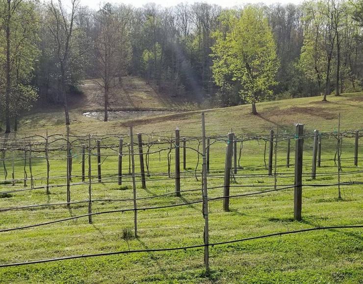 Six Waterpots Winery & Vineyard